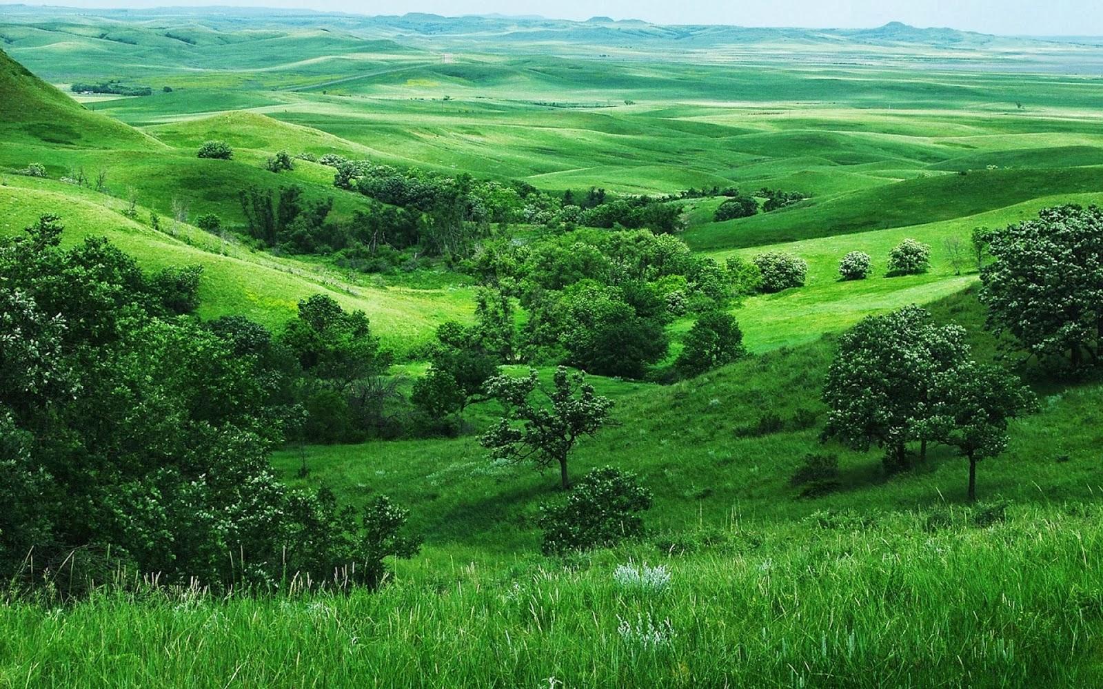 Most Beautiful Lush Green Full Hd Desktop Backgrounds - High Resolution Green Landscape , HD Wallpaper & Backgrounds