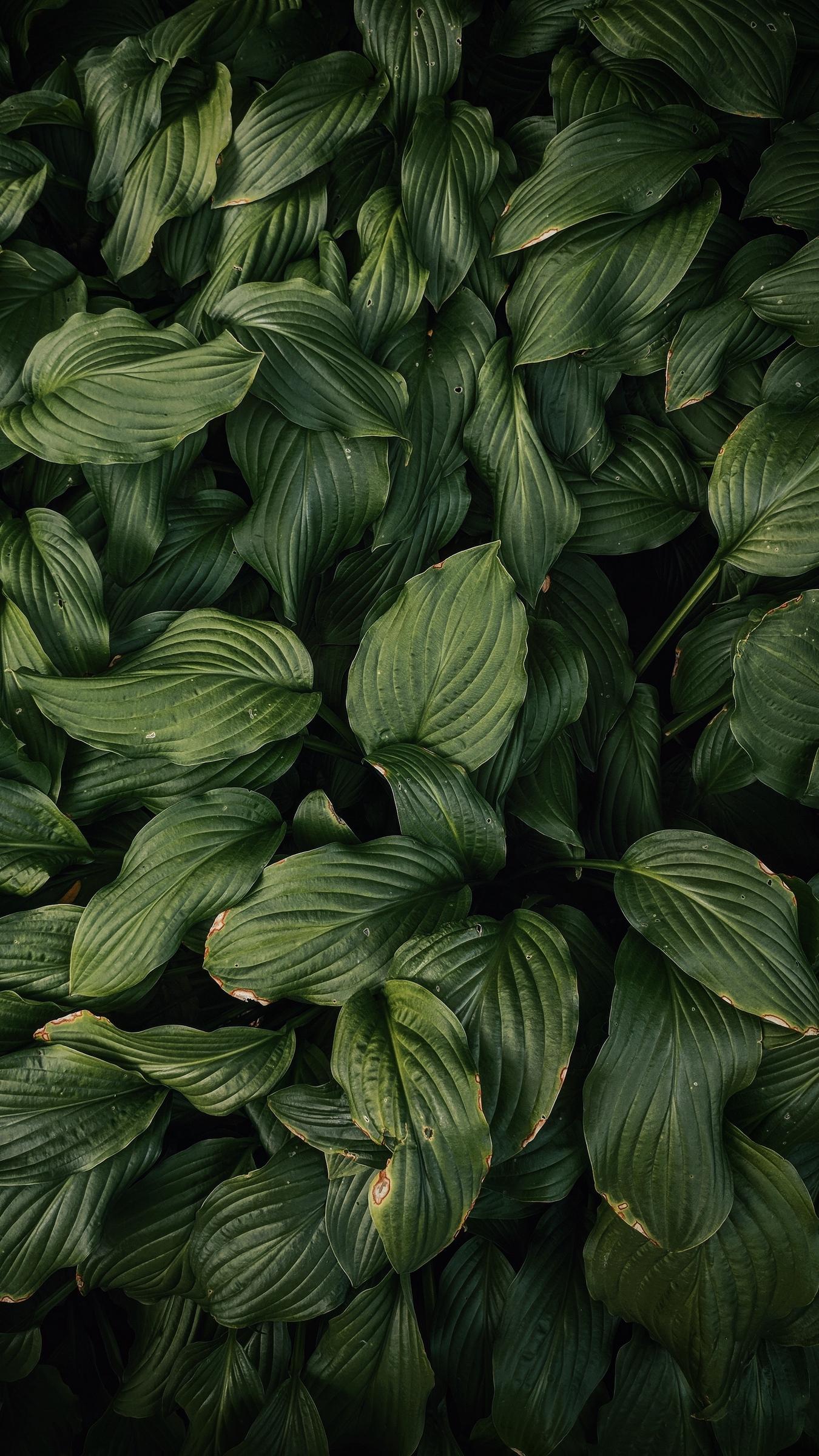 Wallpaper Leaves Plant Green Dark Green Dark Green Plant Background 2946770 Hd Wallpaper Backgrounds Download