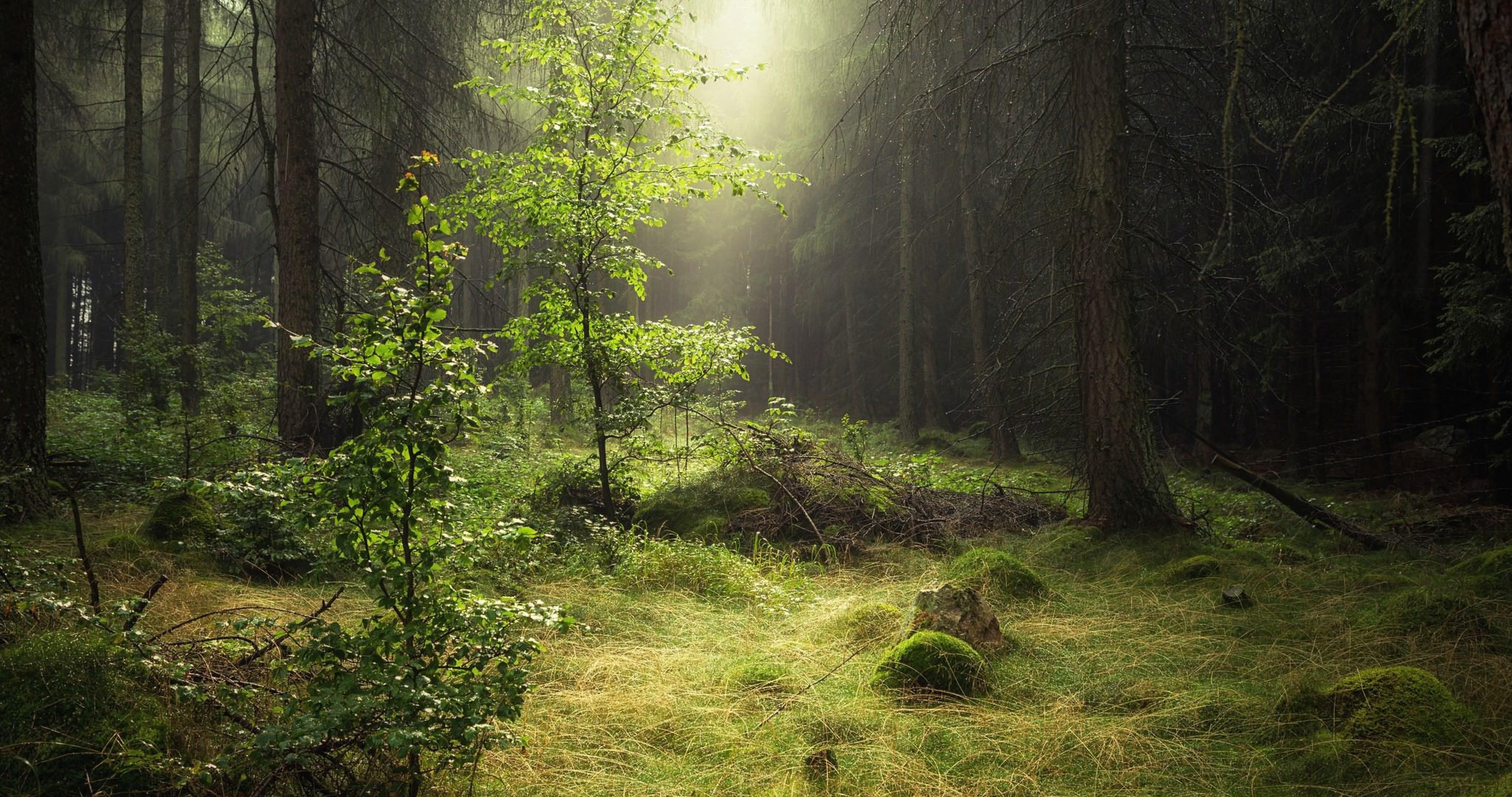 4k Wallpaper Nature Forest , HD Wallpaper & Backgrounds