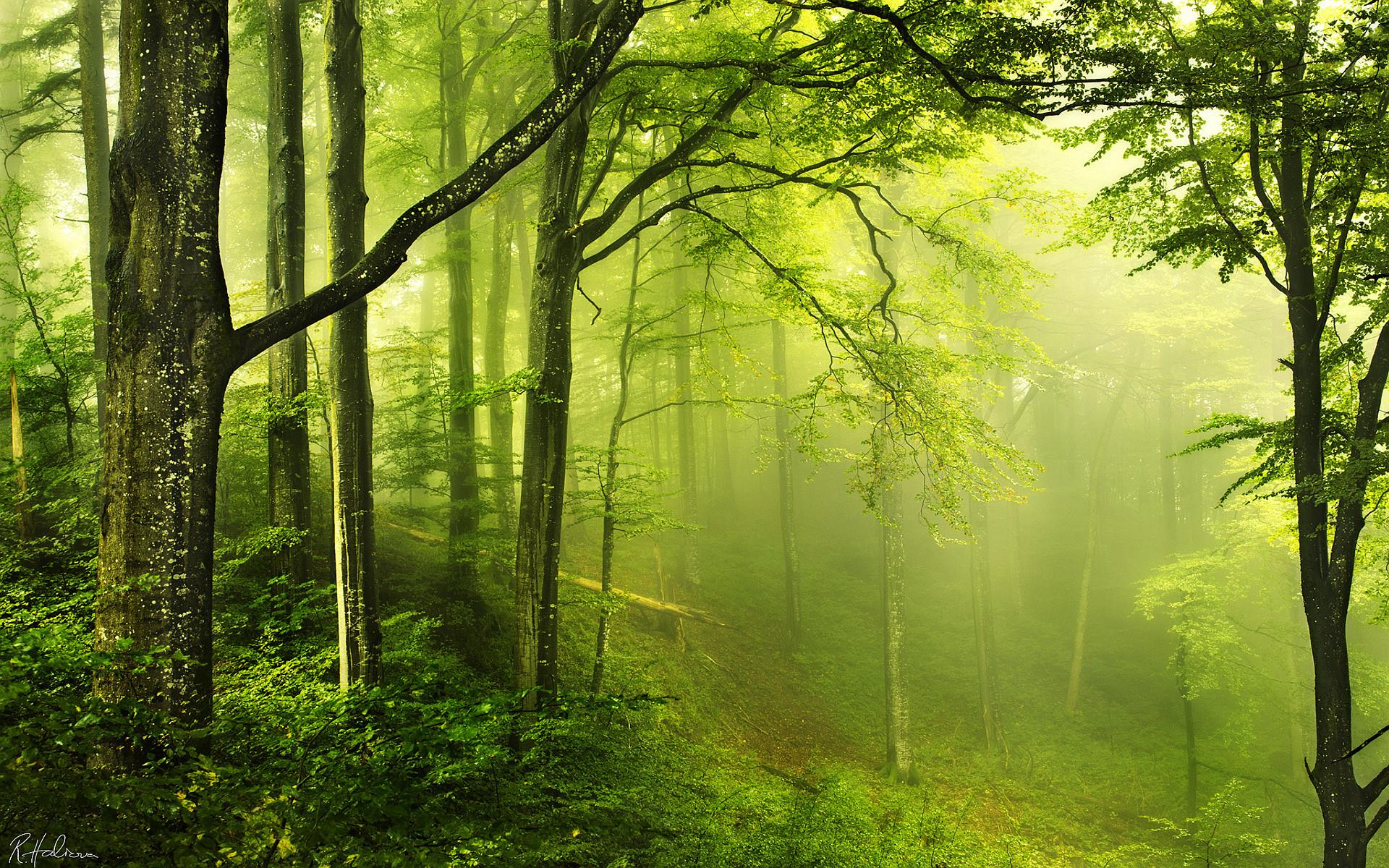 Forest Live Wallpaper - Forest Beautiful , HD Wallpaper & Backgrounds