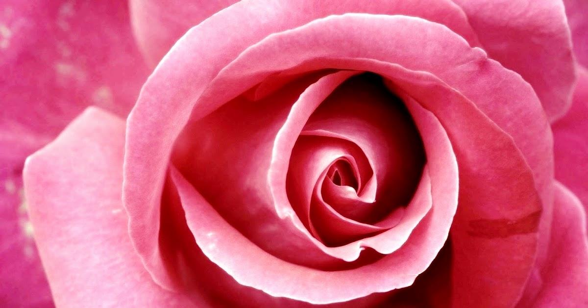 Beautiful Good Night Pink Rose , HD Wallpaper & Backgrounds