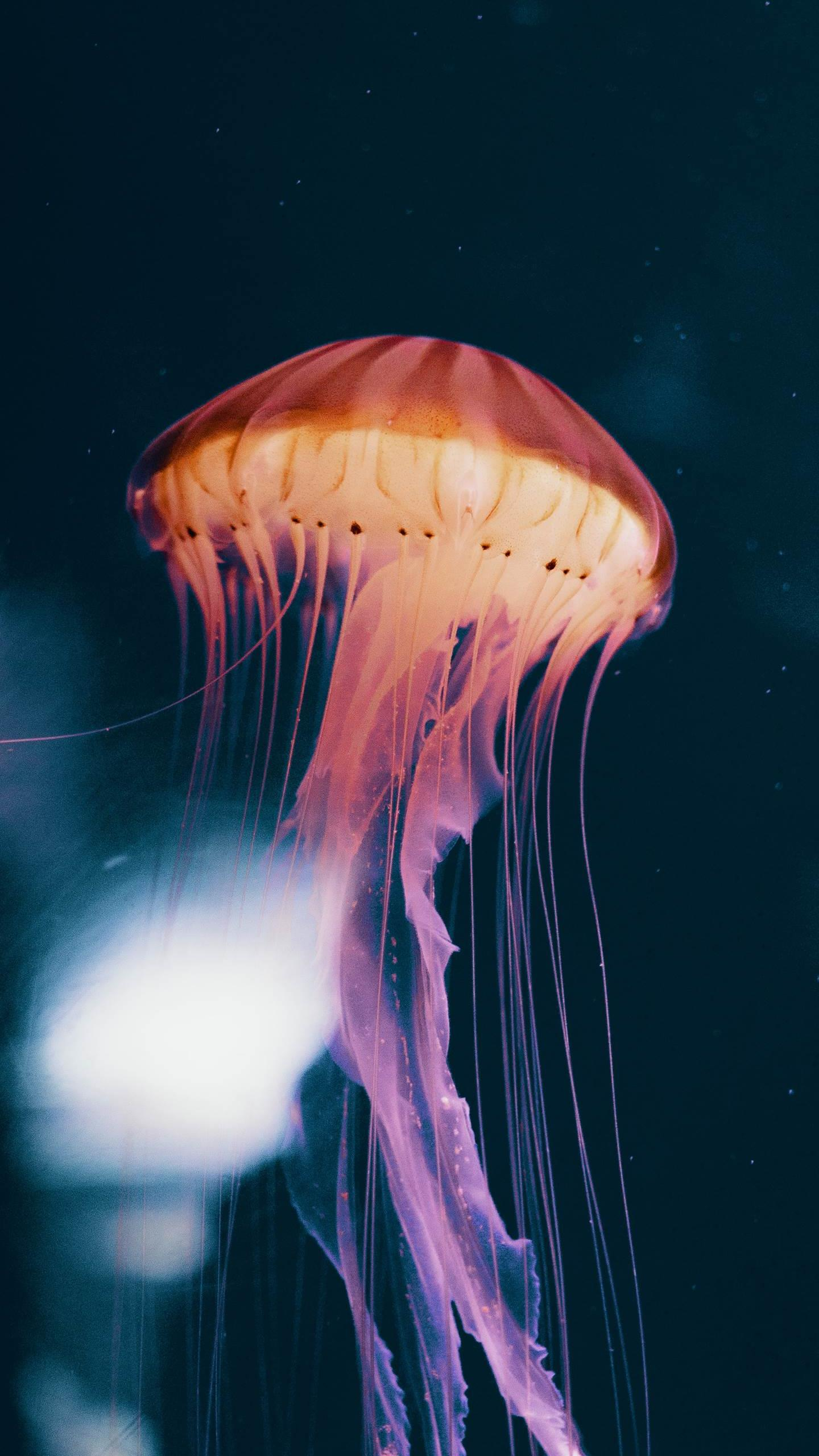 Pretty Backgrounds Jellyfish Iphone , HD Wallpaper & Backgrounds