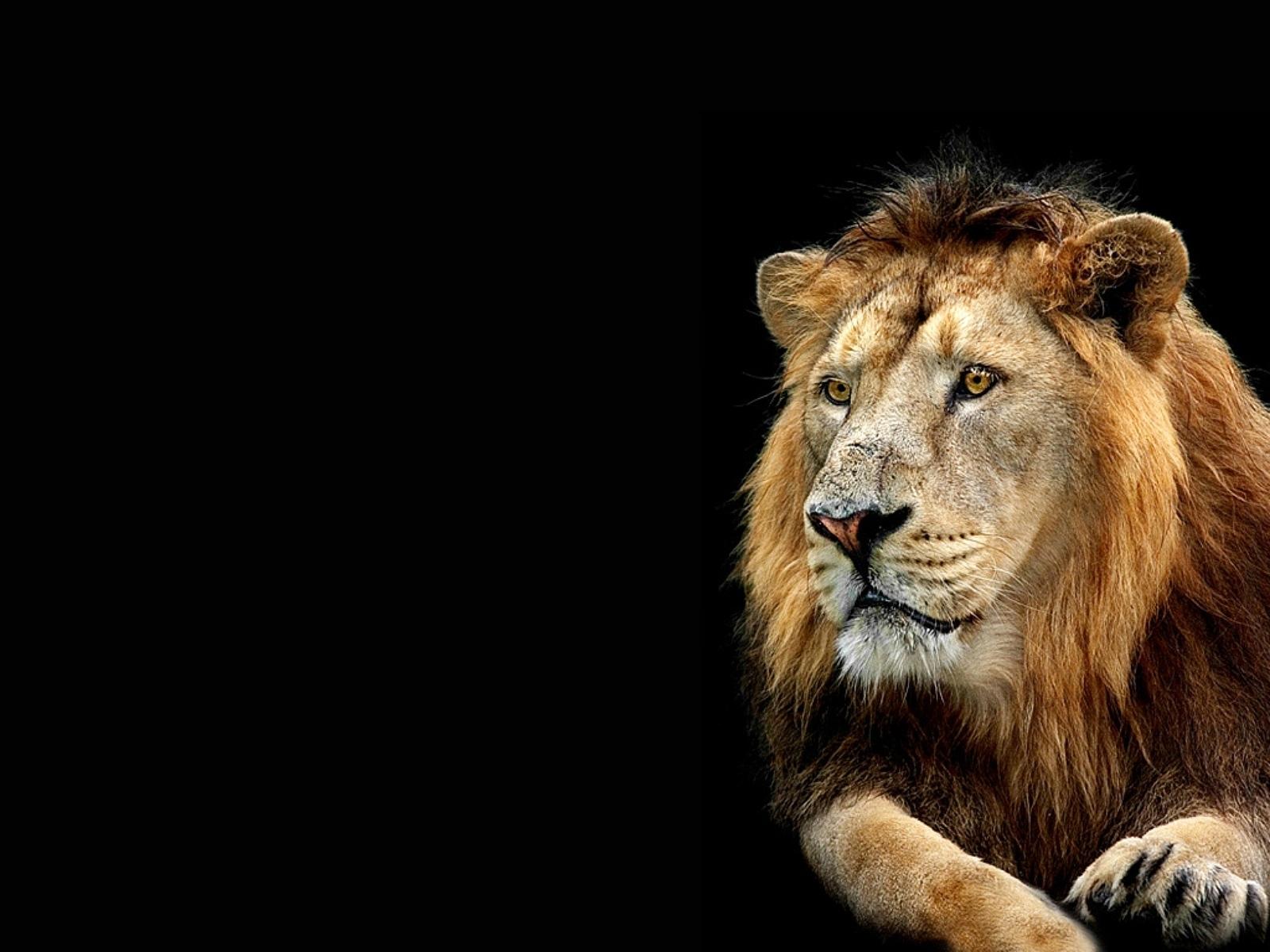 3d Lion Wallpaper - Full Hd Lion 3d , HD Wallpaper & Backgrounds