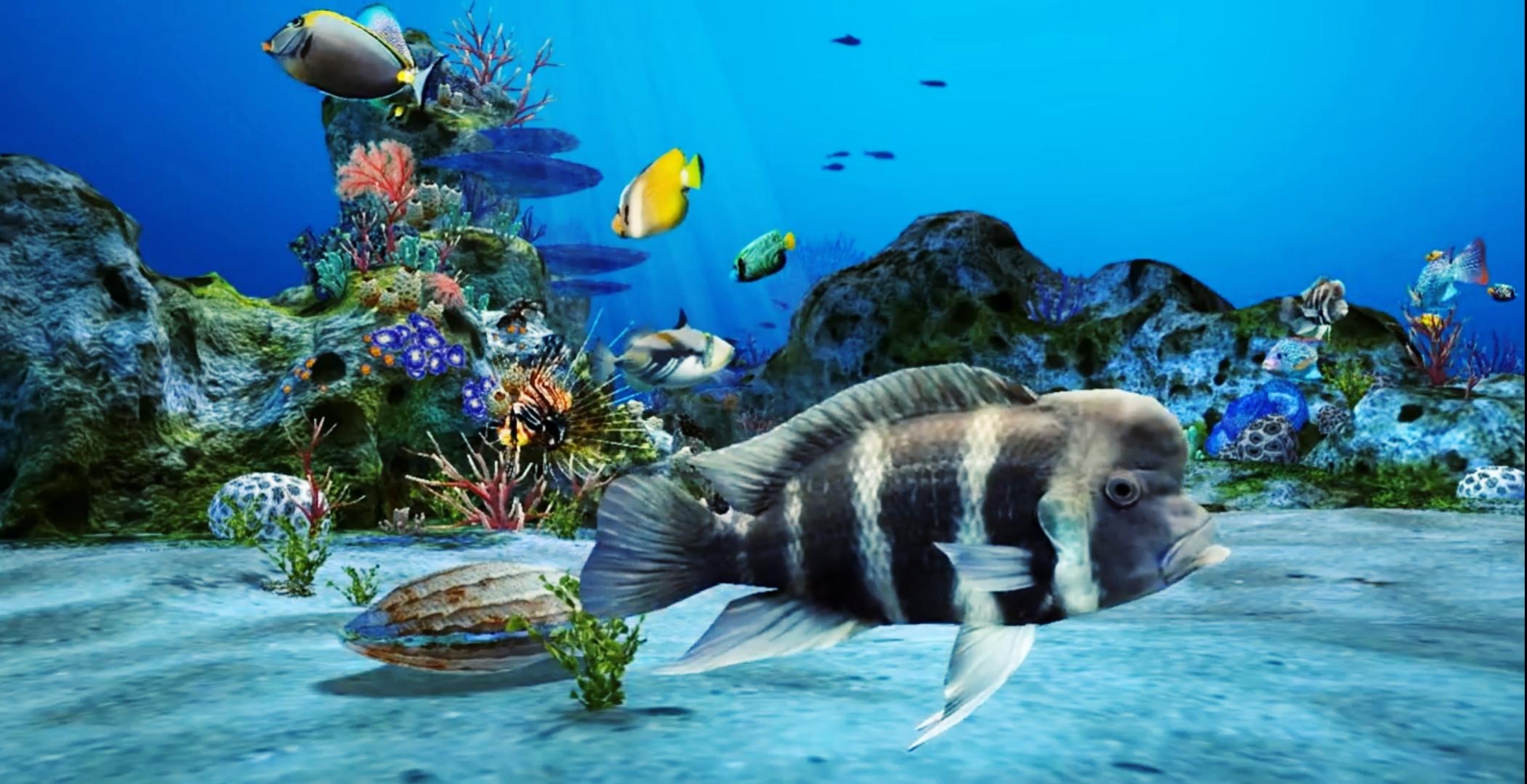 Img 20191123 181806 - 3d Aquarium , HD Wallpaper & Backgrounds