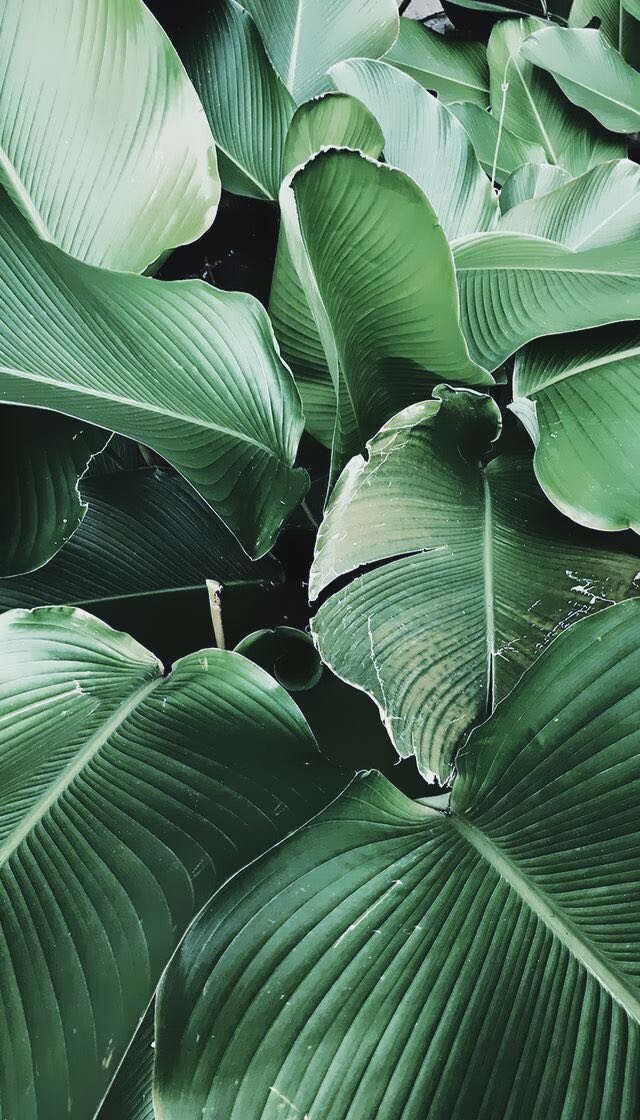 Plant Wallpaper Iphone Wallpaper He And Plants Green Leaves 2989748 Hd Wallpaper Backgrounds Download
