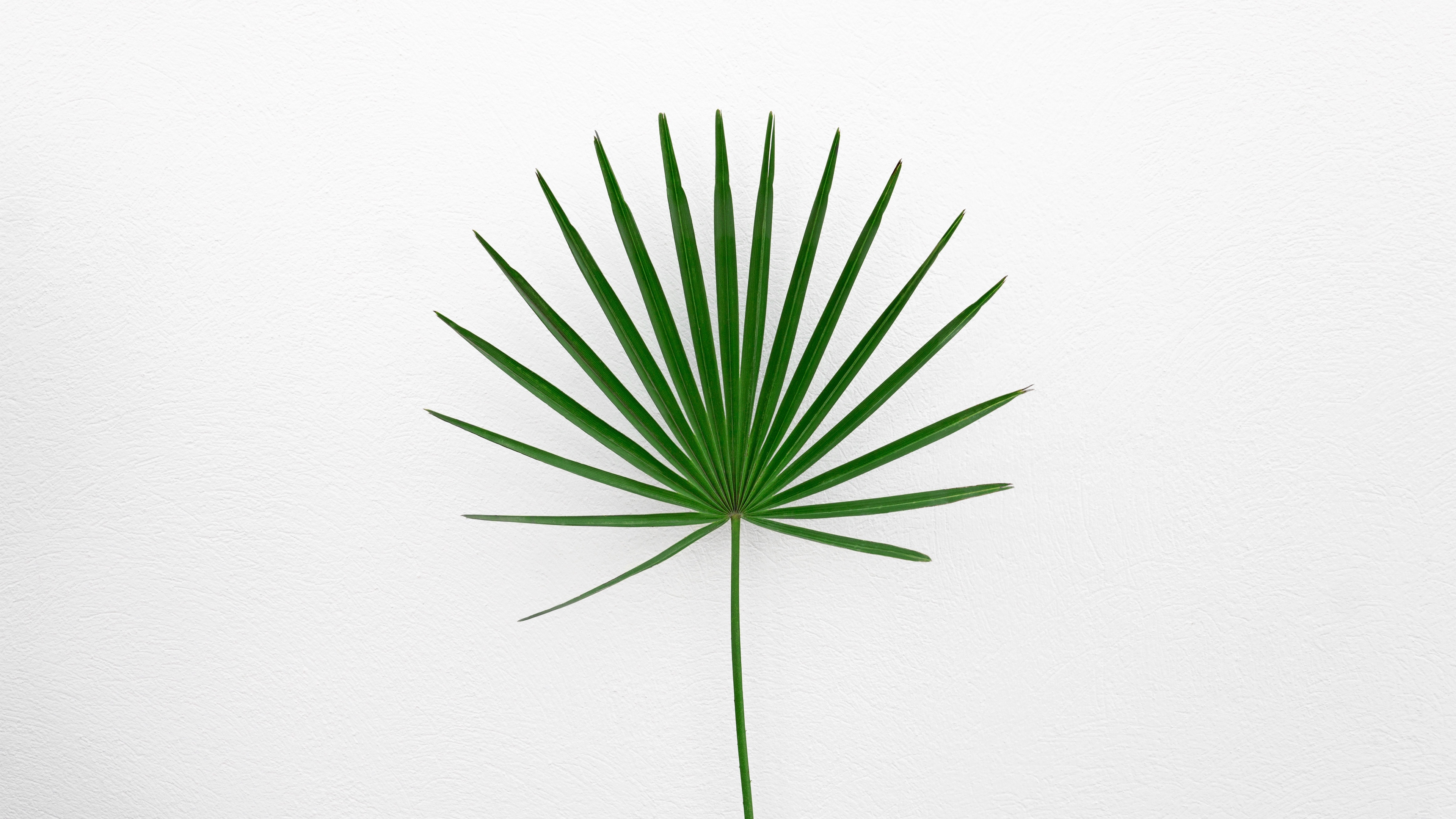 Wallpaper Leaf Plant Minimalism Green White Grass 2989817 Hd Wallpaper Backgrounds Download
