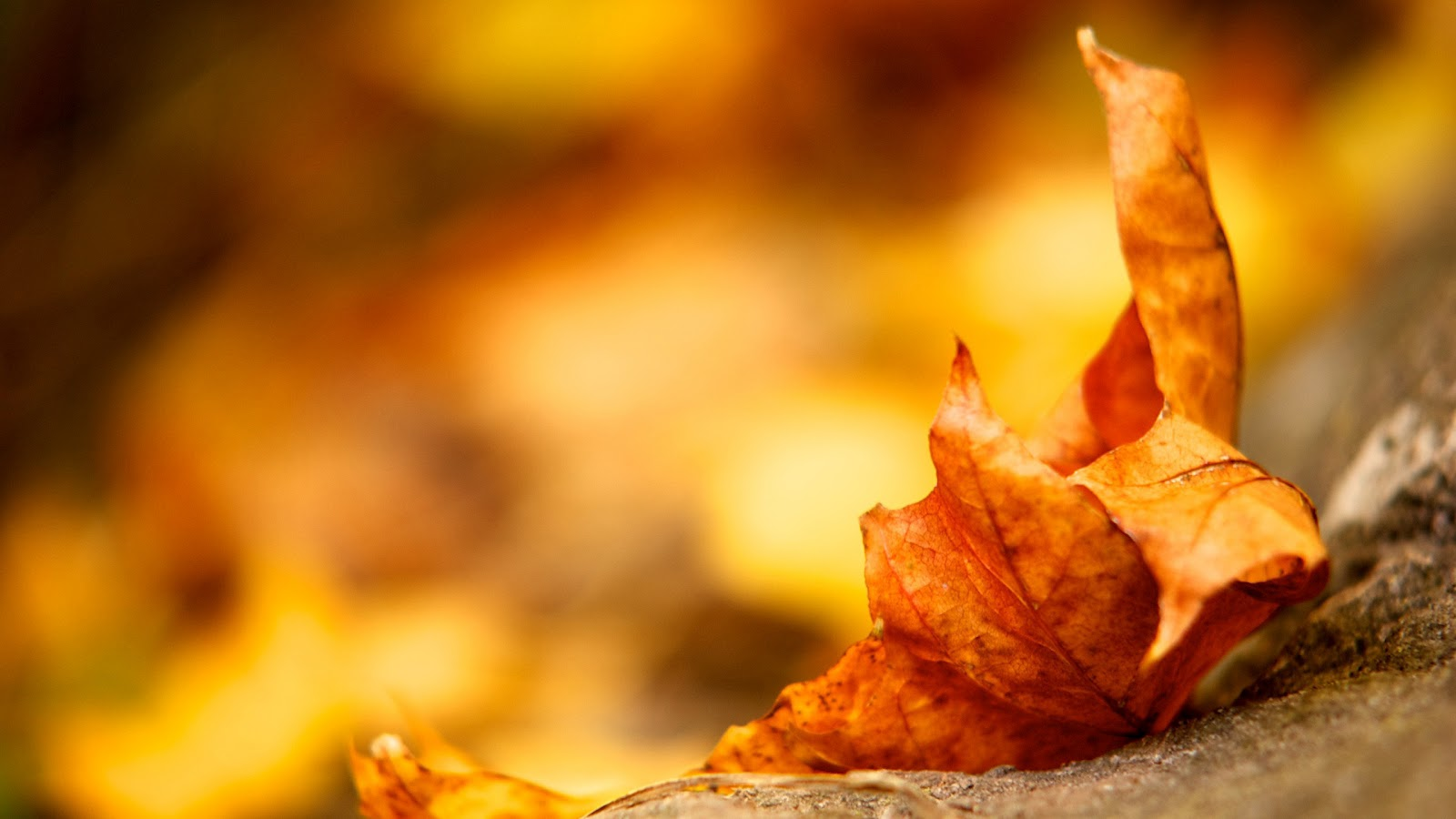 Fall Leaf Wallpaper - Hd Wallpapers Of Autumn Leaf , HD Wallpaper & Backgrounds