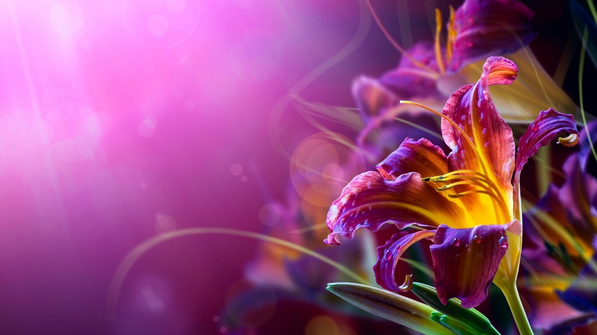 Wallpapers With Your Name - Abstract Flower Backgrounds , HD Wallpaper & Backgrounds