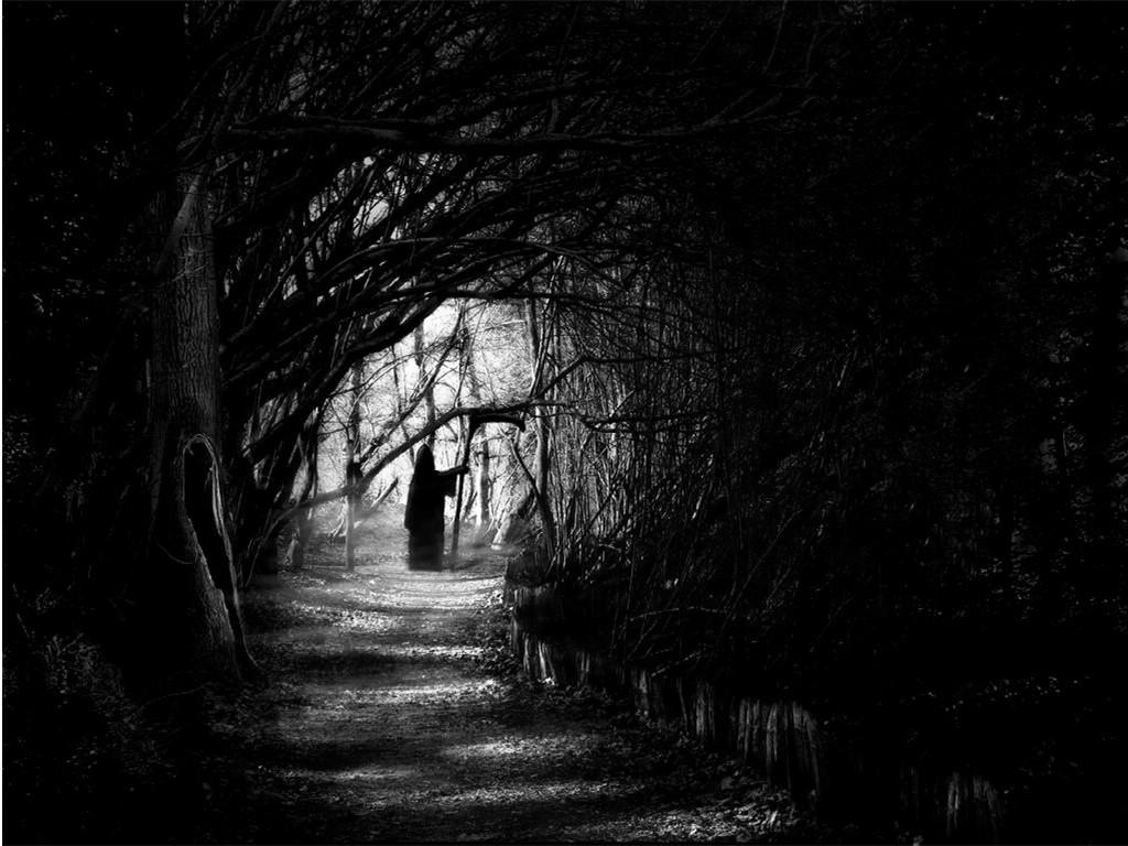 Dark Forest Wallpapers High Resolution Background 1 Black Forest Night 302699 Hd Wallpaper Backgrounds Download