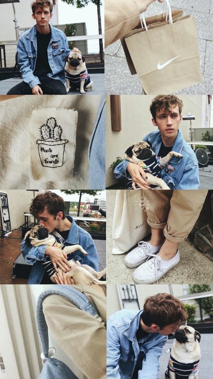 Cute, Dog, Troye Sivan, Wallpaper, Troye - Sitting , HD Wallpaper & Backgrounds