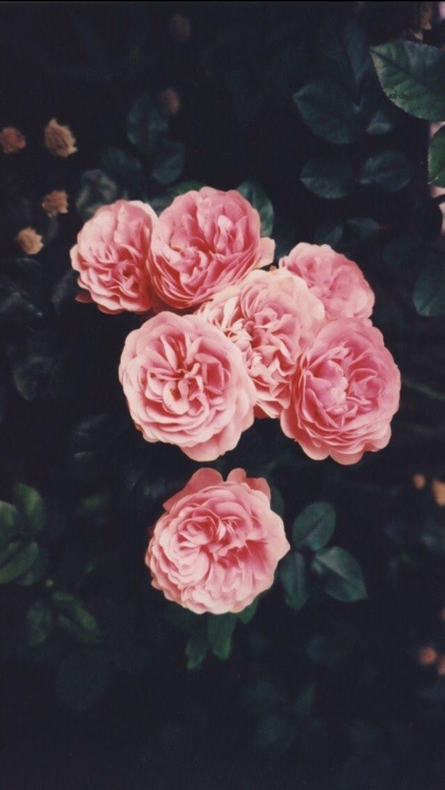 Lockscreens - Tumblr - Hipster Flower , HD Wallpaper & Backgrounds