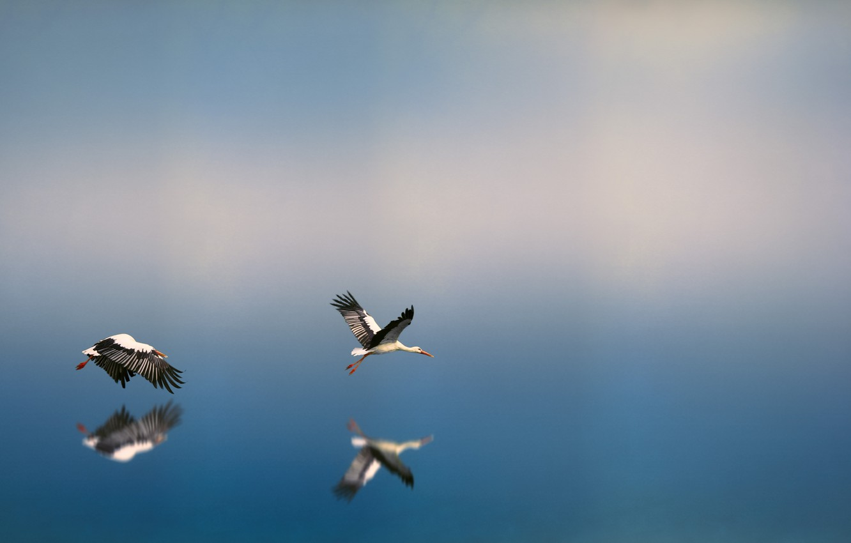 Photo Wallpaper Water, Nature, Reflection, Bird, Flight, - Bird Flying Over Water , HD Wallpaper & Backgrounds