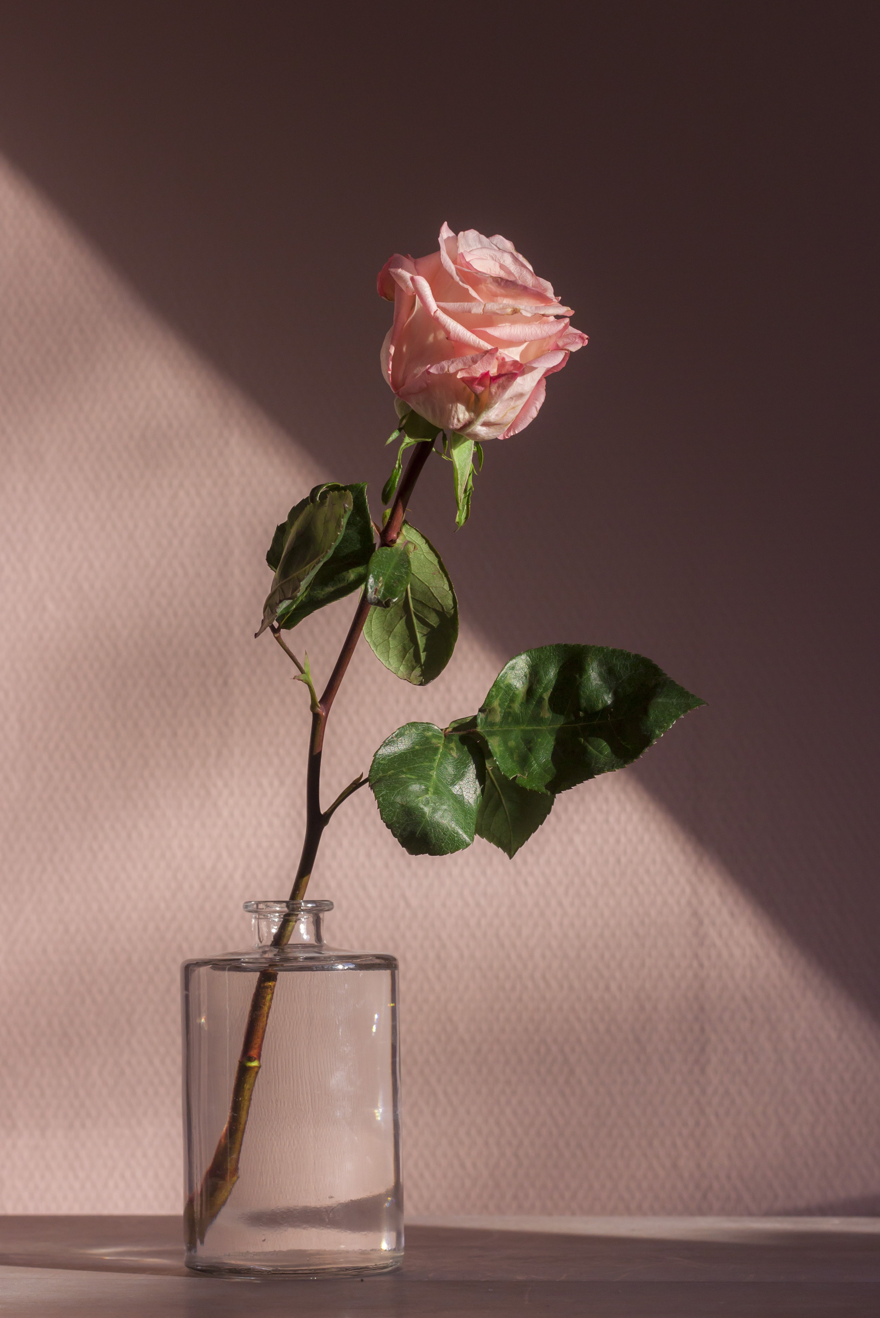 Baby Pink Aesthetic Rose 3019651 Hd Wallpaper Backgrounds Download Aesthetic rose roses floweraesthetic animeaesthetic redaesthetic medibangpaintpro f2u flower. baby pink aesthetic rose 3019651
