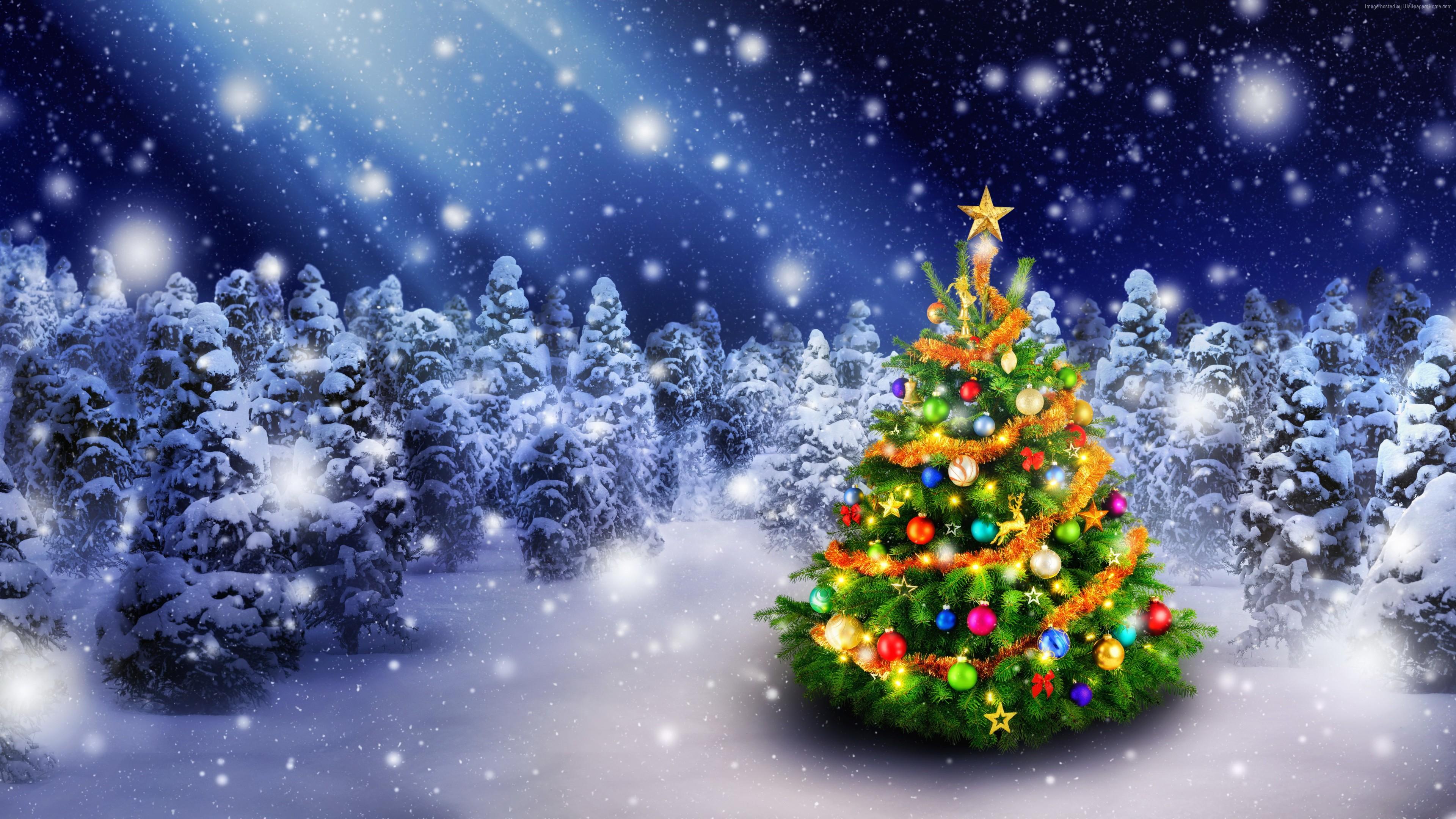 Hình Ảnh Cây Thông Noel , HD Wallpaper & Backgrounds