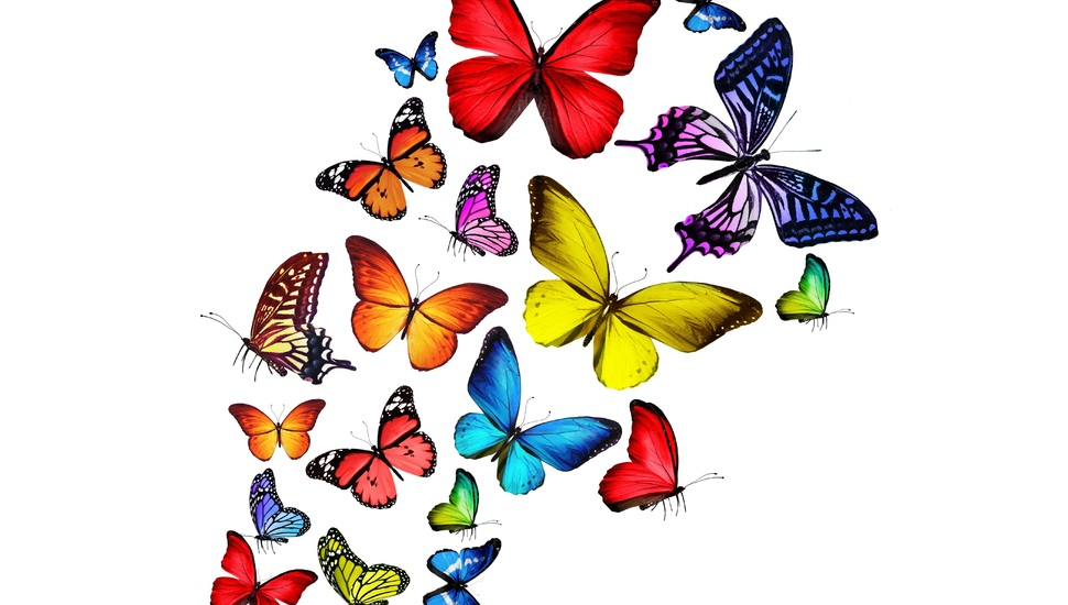 Bright Multi Coloured Wallpaper - Colorful Butterfly Png , HD Wallpaper & Backgrounds