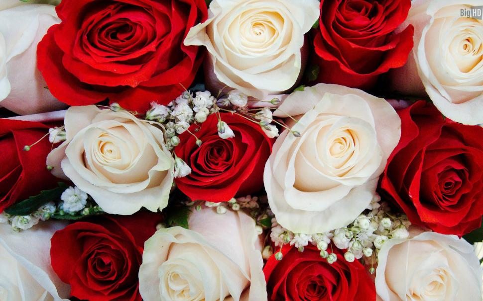 Beautiful White And Red Roses Wallpaper,beautiful Hd - Beautiful White And Red Rose Flowers , HD Wallpaper & Backgrounds