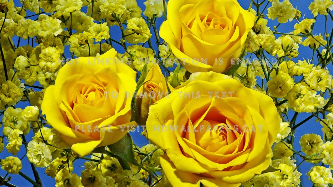 Beauty Of Yellow Roses Flora Bouquet Nature - Rosas Amarillo Flores Amarillas Fondo De Pantalla , HD Wallpaper & Backgrounds
