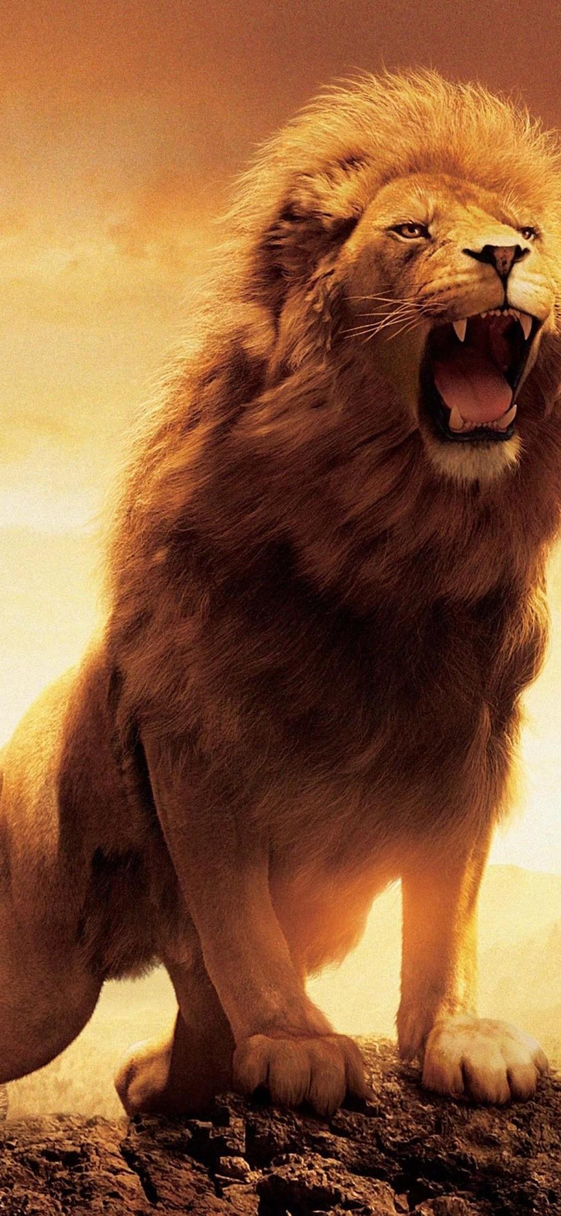 Iphone Ultra Hd Lion Wallpaper 4k , HD Wallpaper & Backgrounds