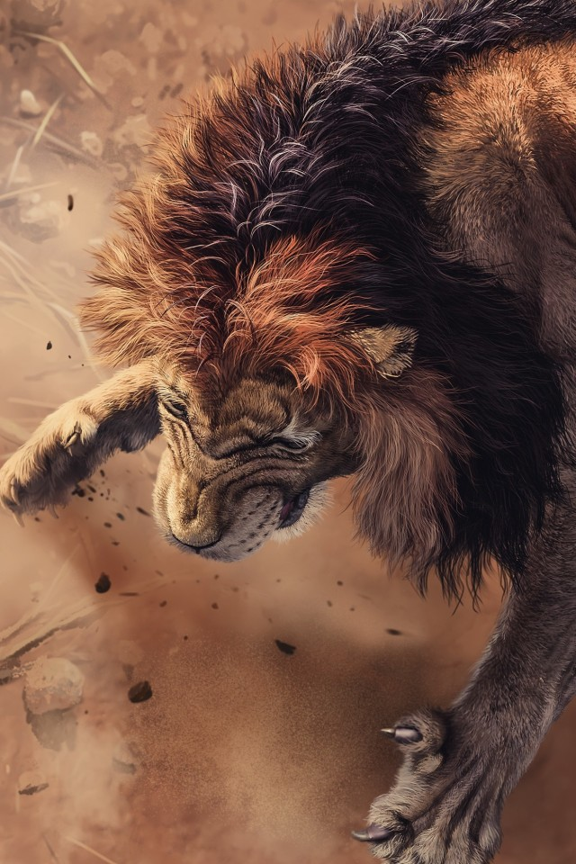 Angry Lion Images Hd , HD Wallpaper & Backgrounds