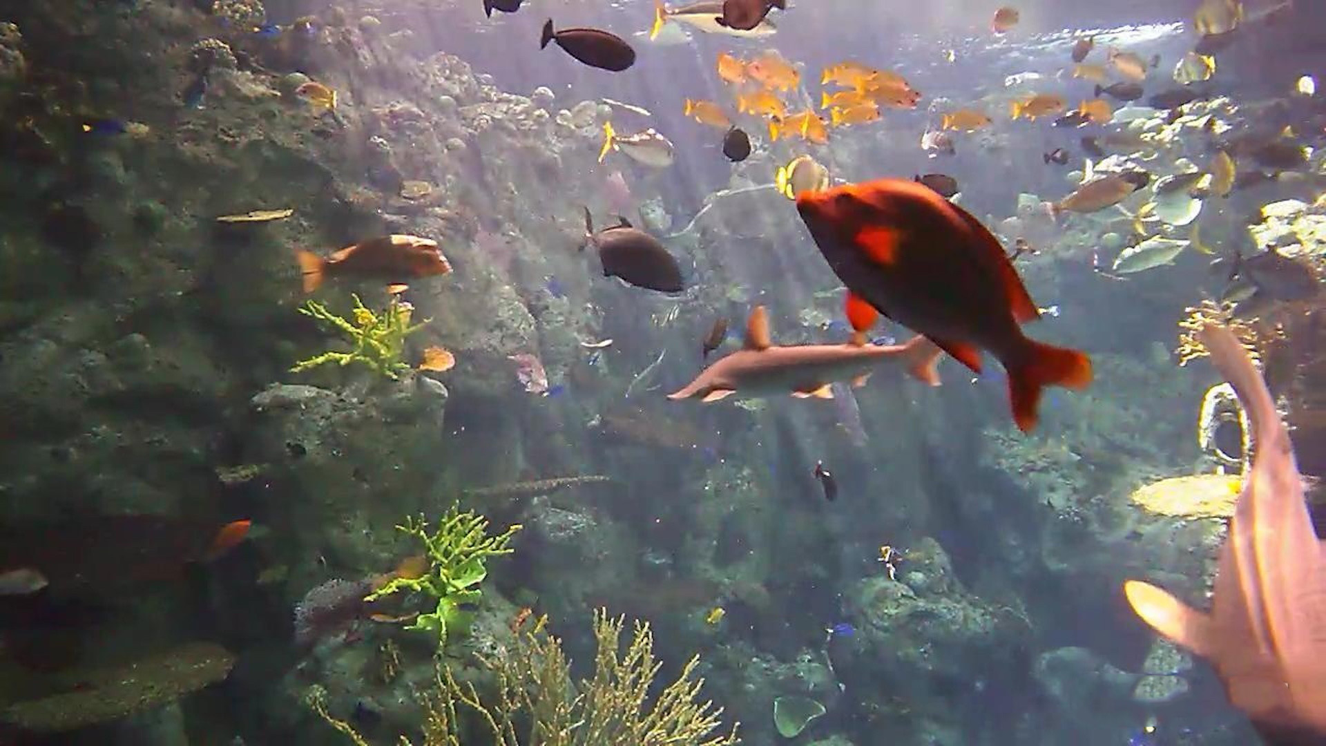 Fish Under Water , HD Wallpaper & Backgrounds