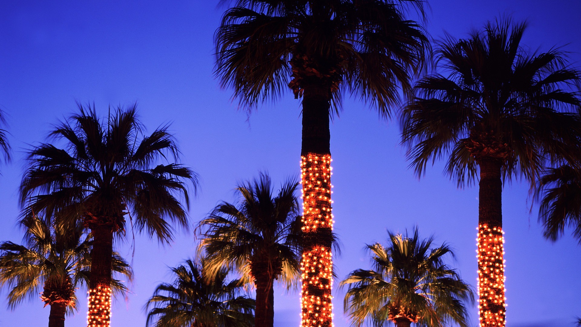 Palm Trees With Christmas Lights Background , HD Wallpaper & Backgrounds