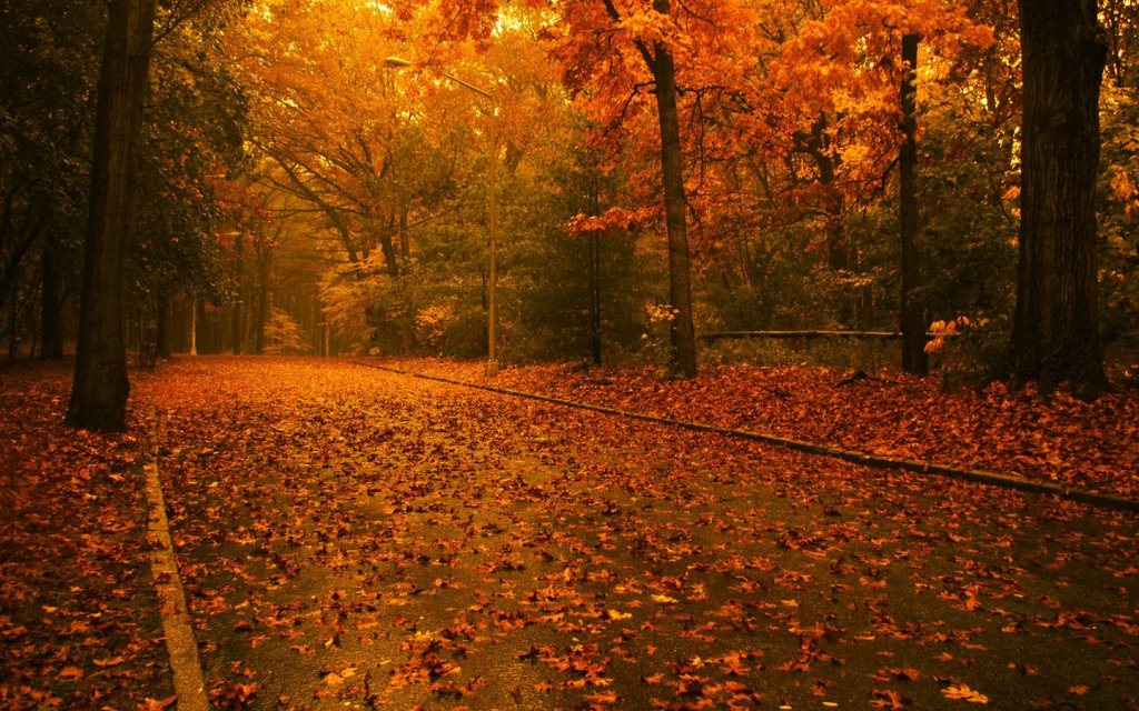 Nature Wallpaper Zip File Download - Tree Leaf Fall Background , HD Wallpaper & Backgrounds