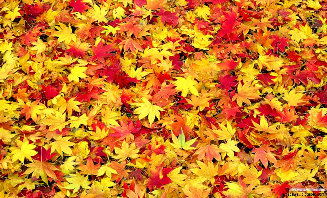 Autumn Leaves 10 Computer Backgrounds Wallpaper Joo - Fall Leaves Background Clipart , HD Wallpaper & Backgrounds