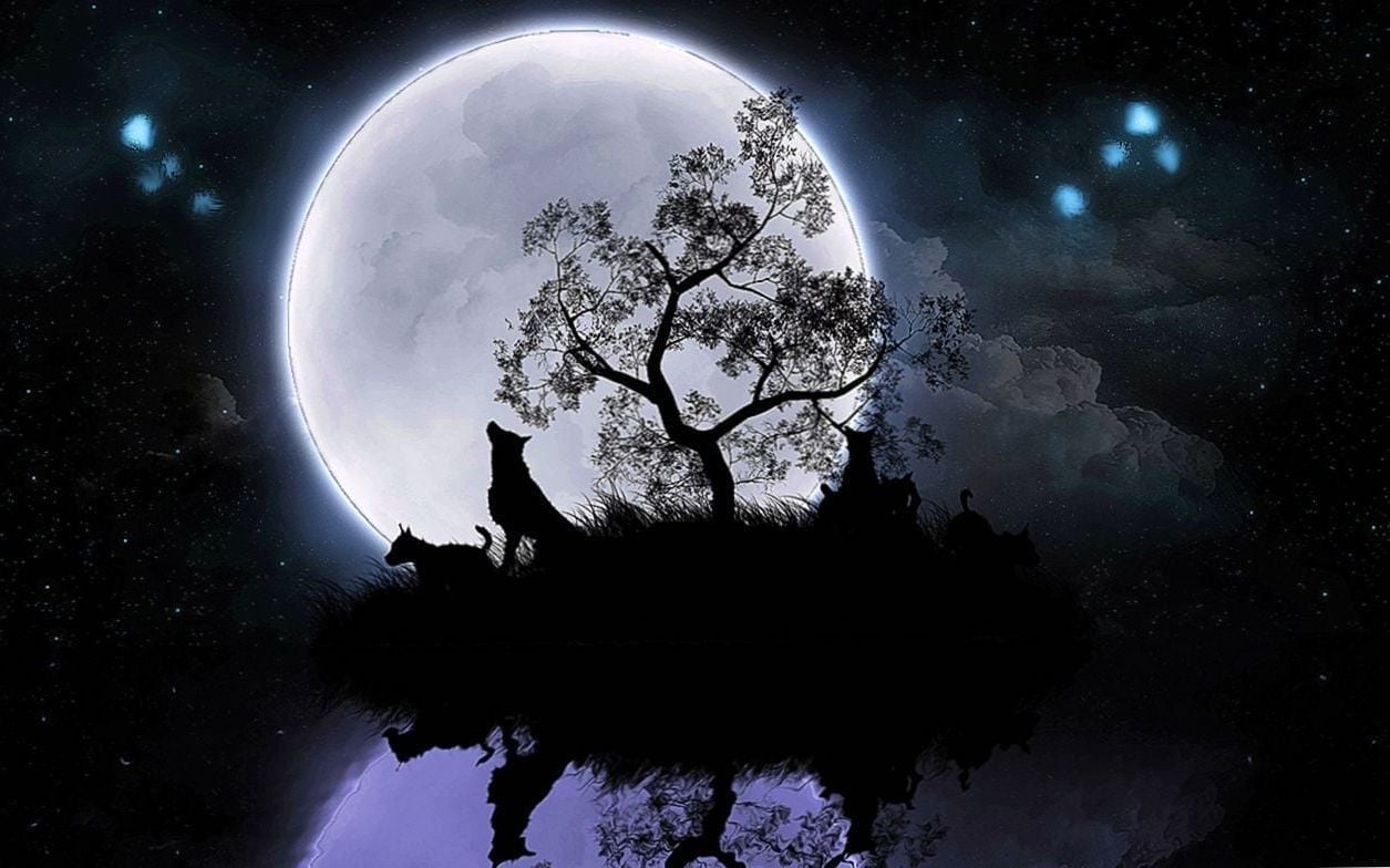 The Wolf And The Moon Wallpapers Hd Wolf Wallpapers - Wolf And Moon Wallpaper Hd , HD Wallpaper & Backgrounds