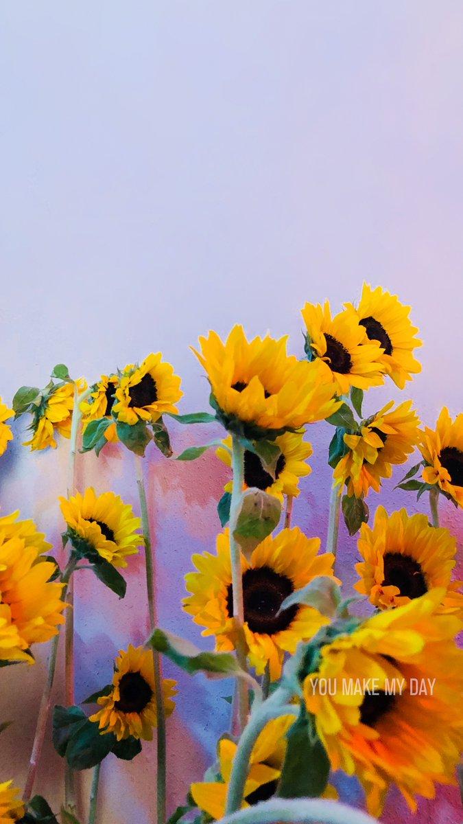 Seventeen Wallpaper Pop And Soft Aesthetic Seventeen You Made My Dawn 3092678 Hd Wallpaper Backgrounds Download