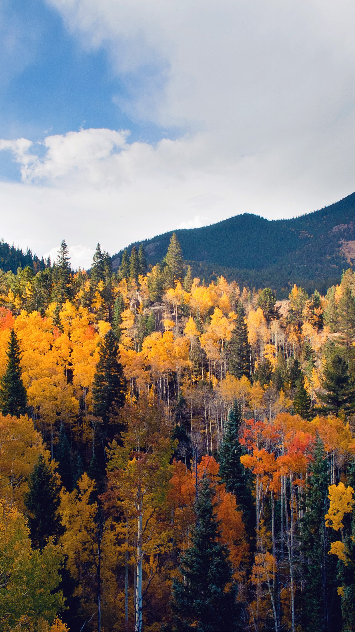 Autumn Iphone Wallpaper Pic Hwb13508 - Fall Trees Wallpaper Iphone , HD Wallpaper & Backgrounds