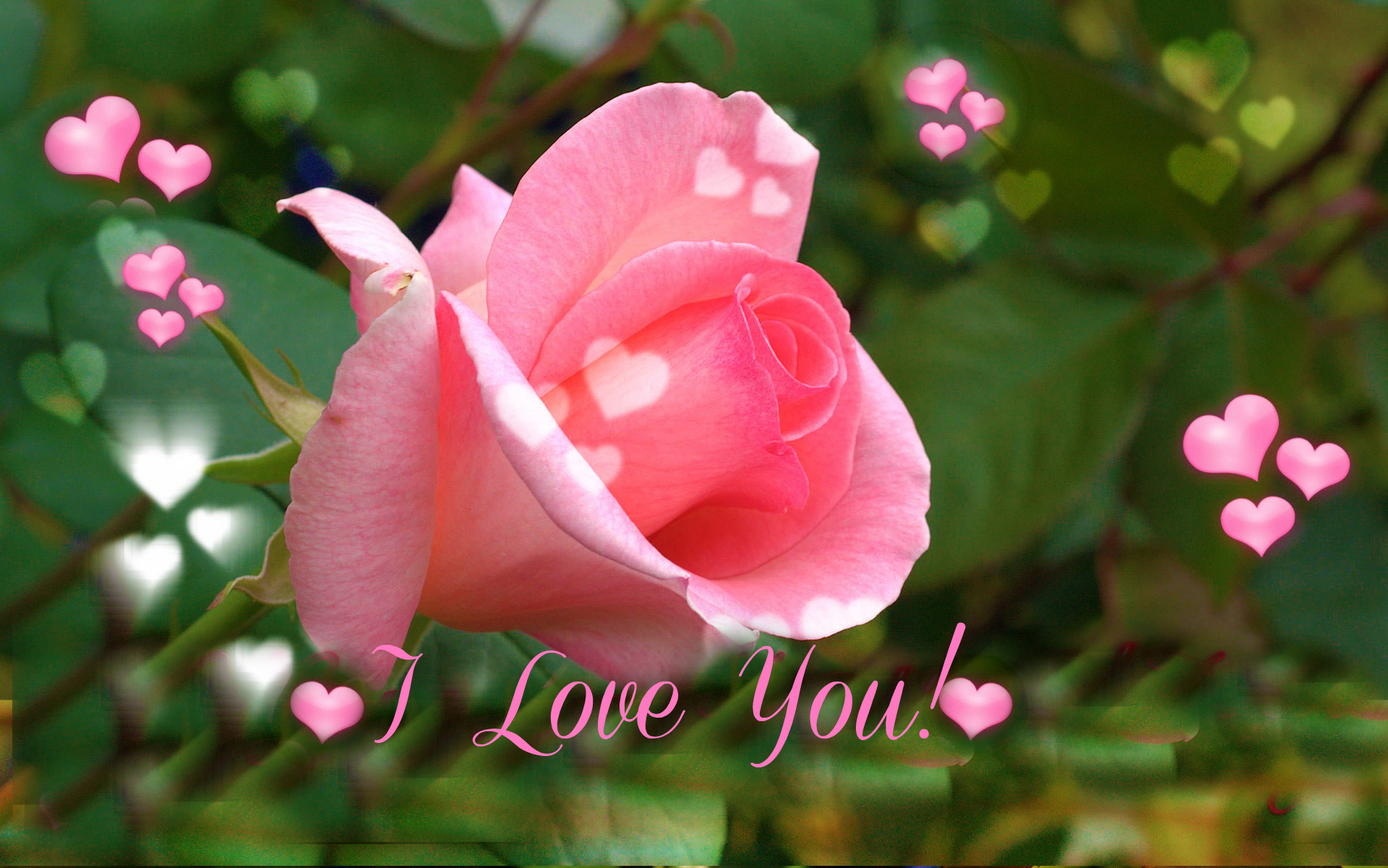 I Love You Pink Rose For Valentine S Day Wallpapers - Rose L Love U , HD Wallpaper & Backgrounds