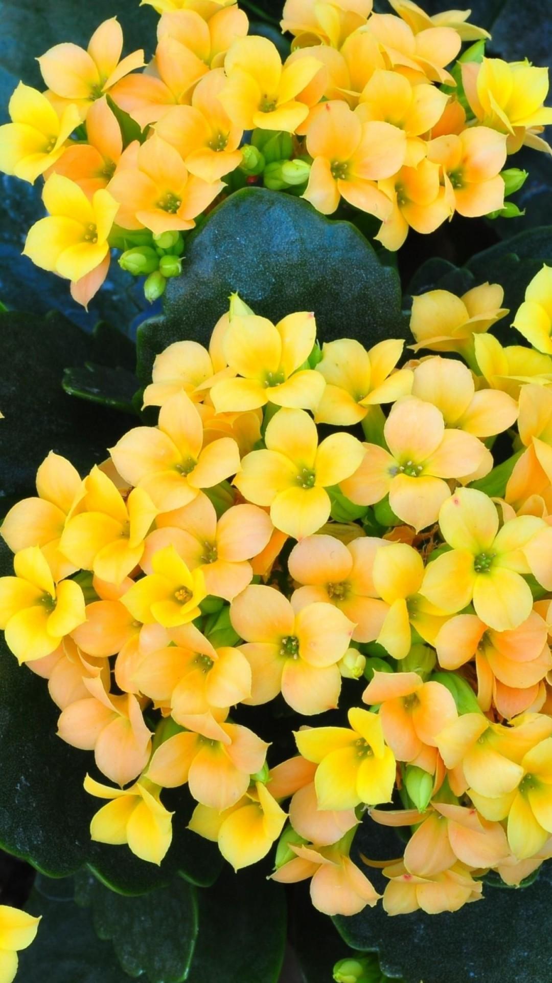 Nature Flowers Bokeh Depth Of Field Yellow Flowers - Yellow Flowers Wall Papers , HD Wallpaper & Backgrounds