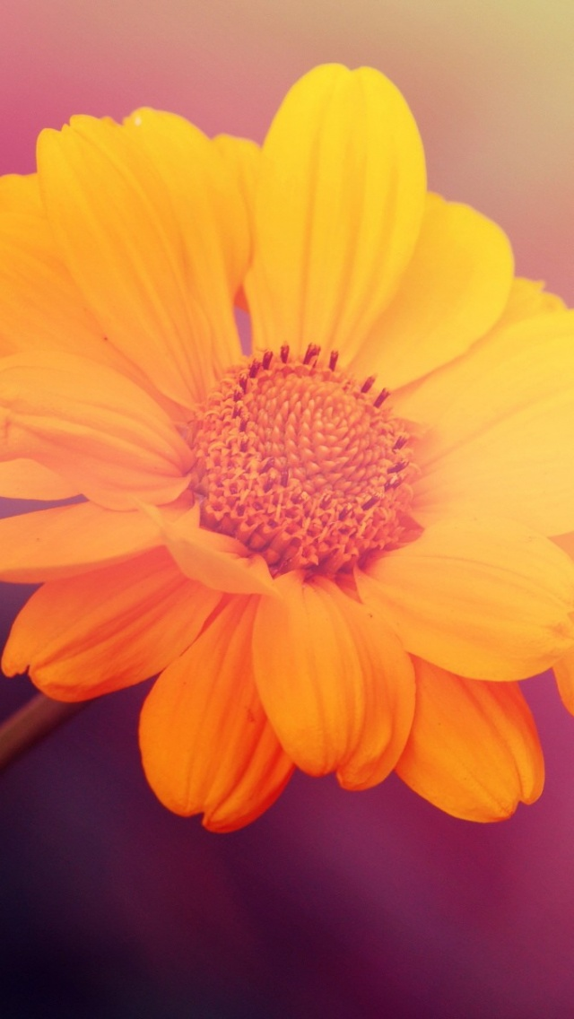 Download A Beautiful Flower Hd , HD Wallpaper & Backgrounds