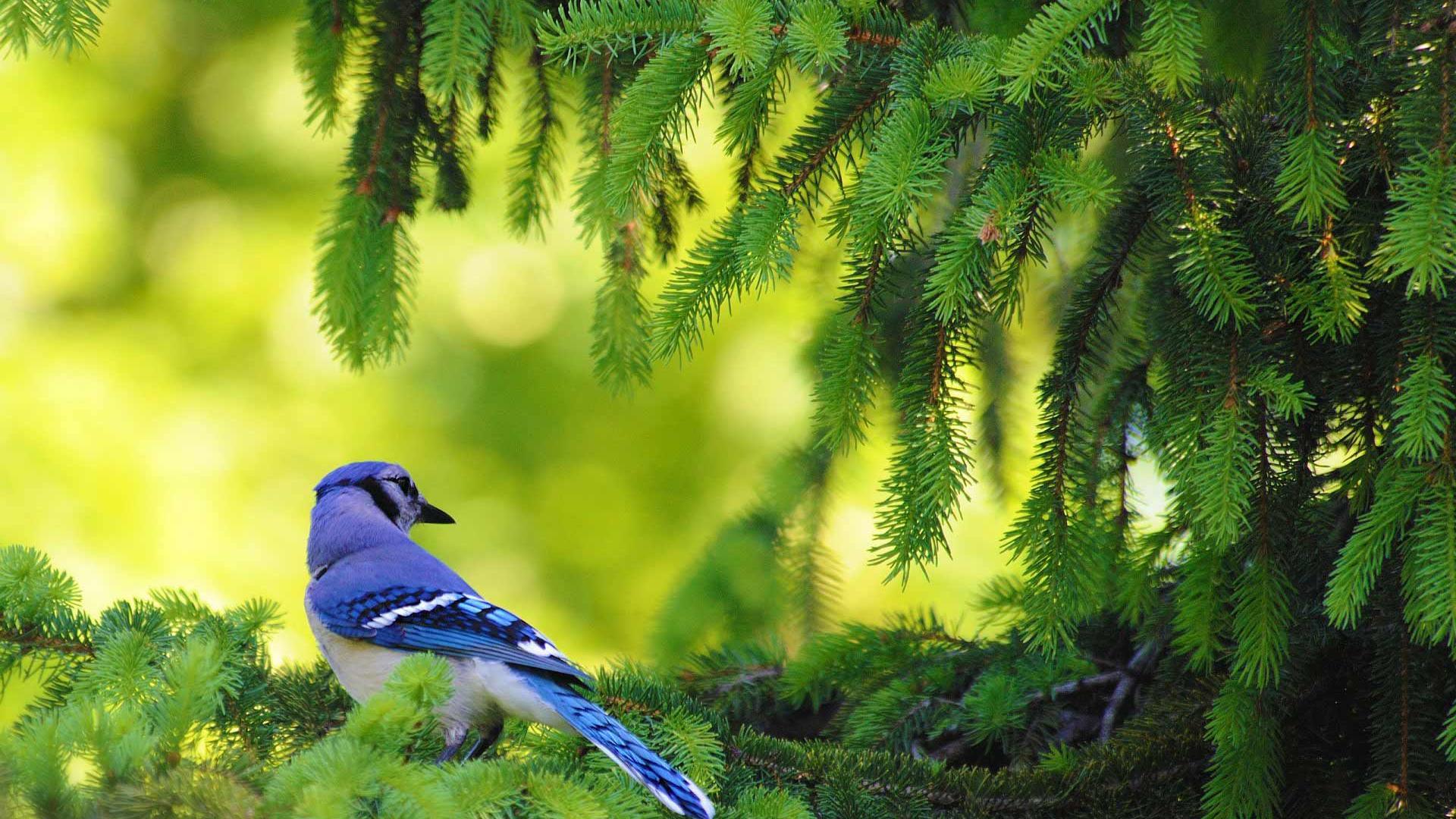Natural Bird Images Hd 316292 Hd Wallpaper Backgrounds Download