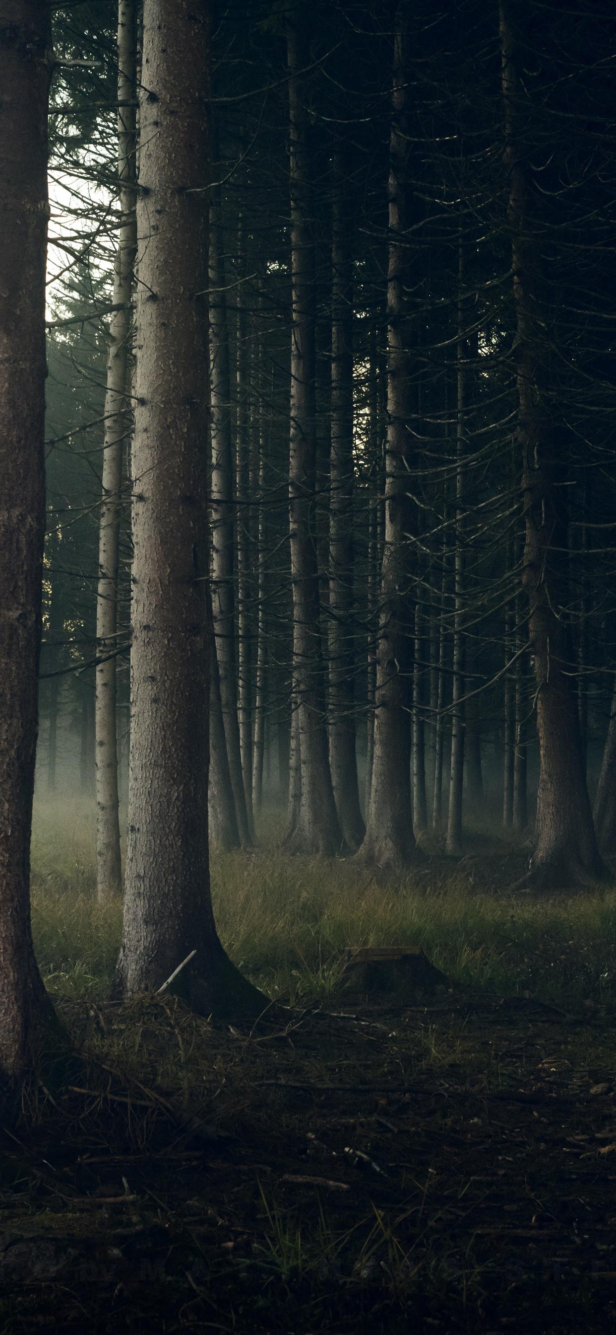 Trunks Iphone Wallpaper - Iphone Xs Max Wallpaper Forest , HD Wallpaper & Backgrounds