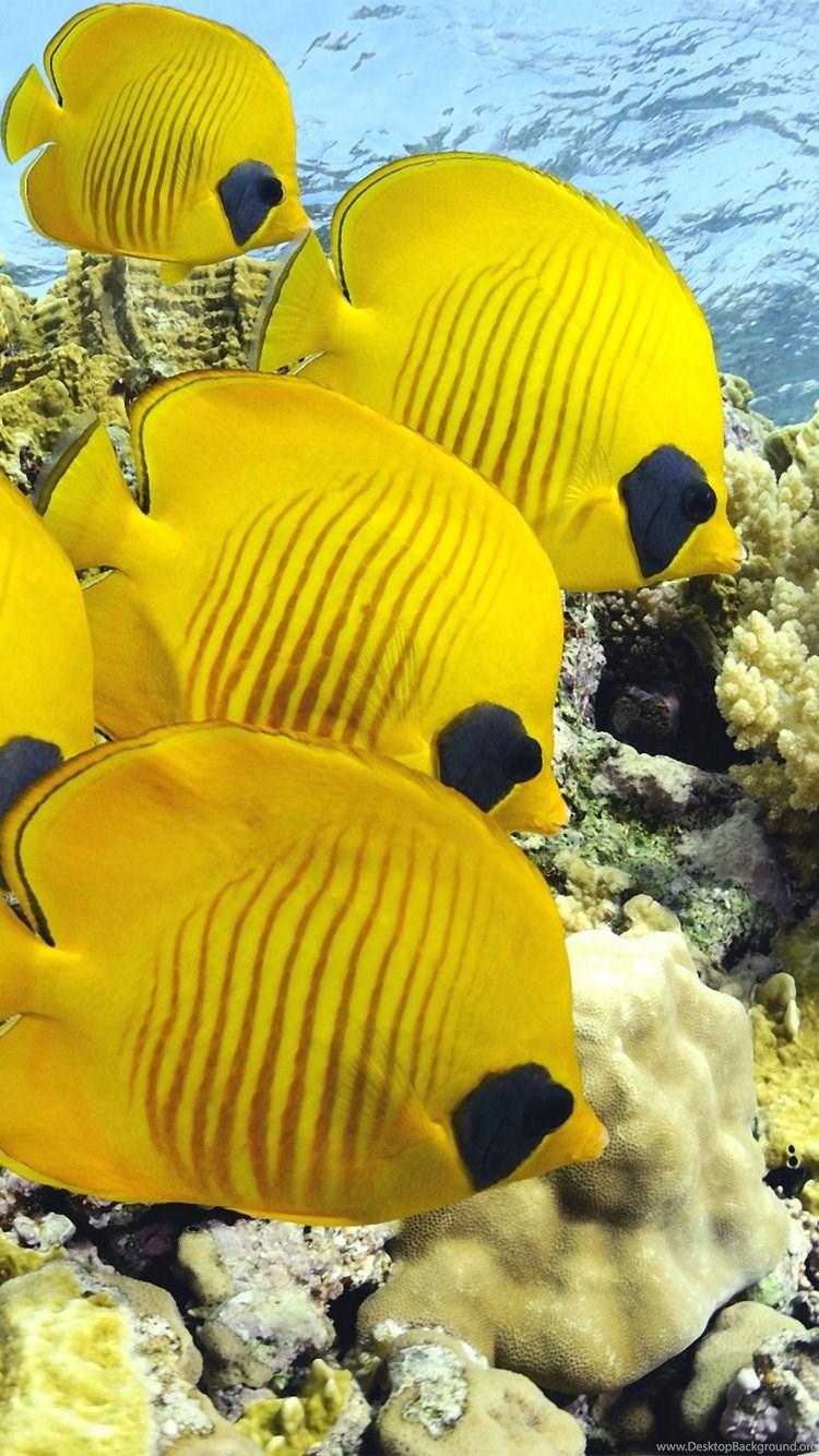Iphone 6 Fish Wallpapers Hd, Desktop Backgrounds - Real Fish In The Sea , HD Wallpaper & Backgrounds