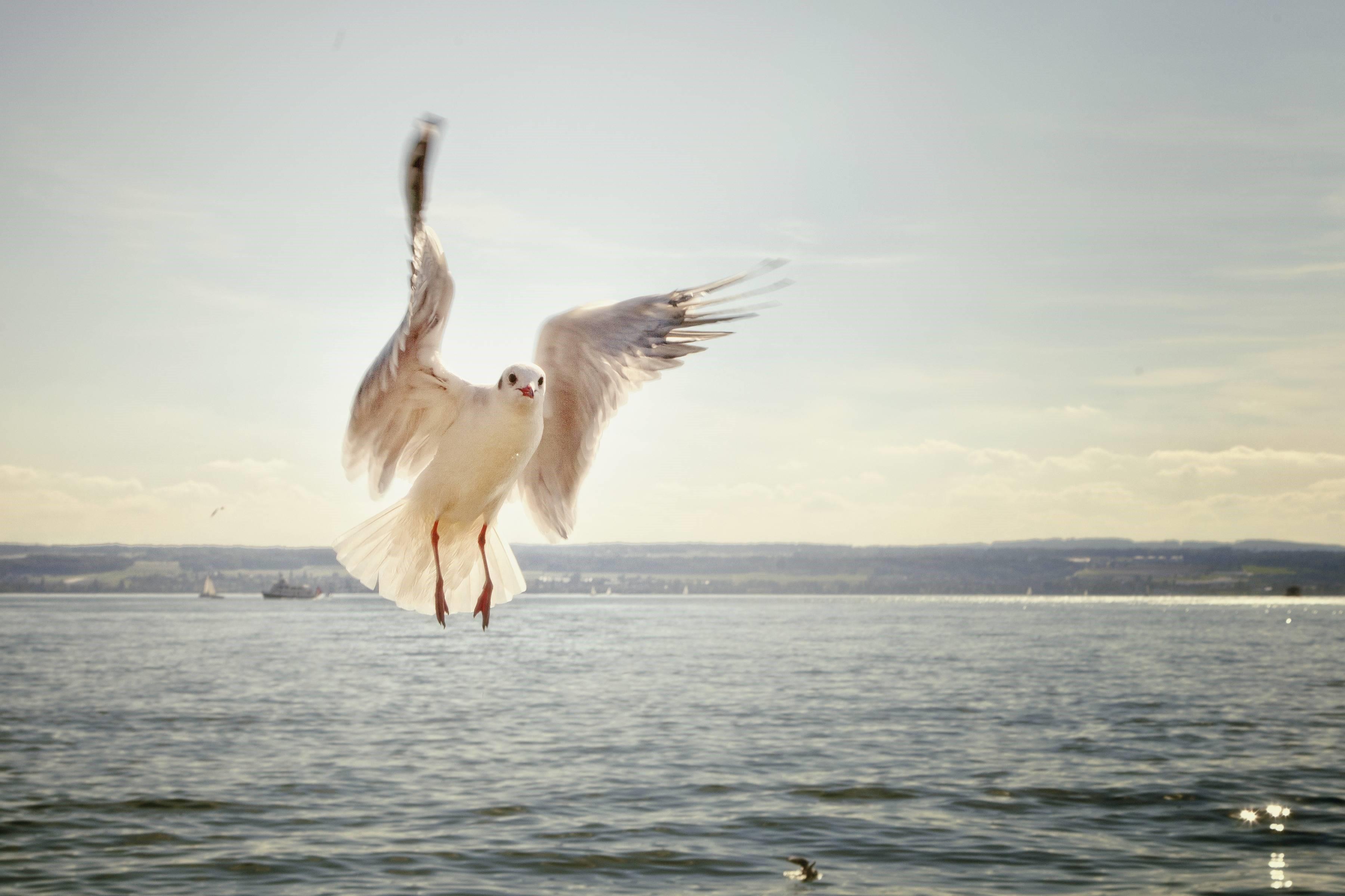 Flying Bird Live , HD Wallpaper & Backgrounds