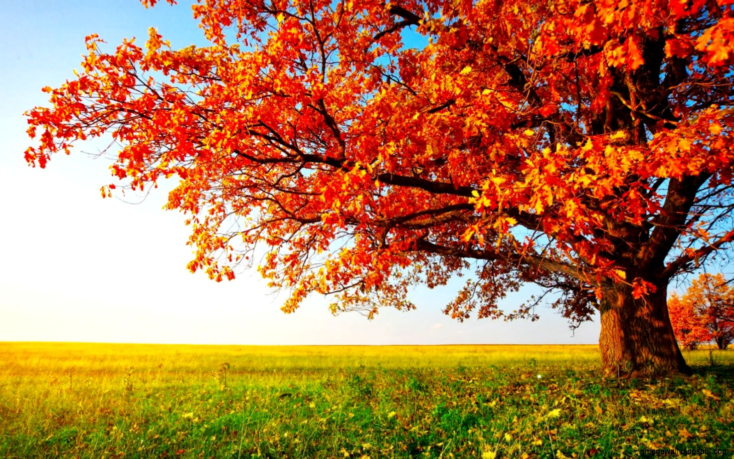 Download Beautiful Scenery Wallpapers Most Beautiful - Autumn Tree , HD Wallpaper & Backgrounds