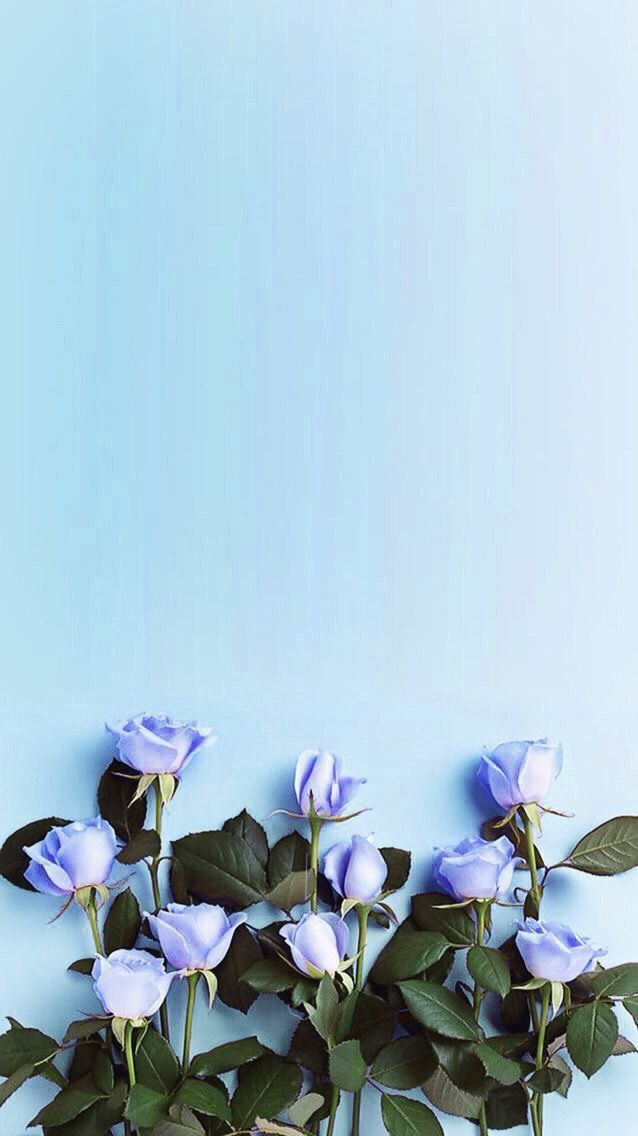 Happy Birthday Blue Roses , HD Wallpaper & Backgrounds