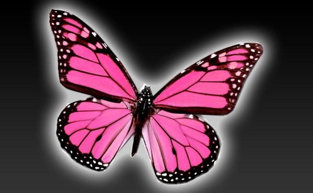 Wallpaper Pink Butterflies Adult T Shirt Pink Butterflies - Pink Light Pink Butterfly , HD Wallpaper & Backgrounds