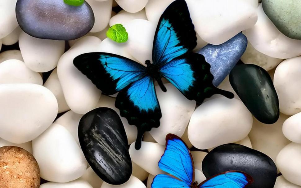 Beautiful Butterfly Wallpaper Hd - Beautiful Butterfly Wallpaper In Hd , HD Wallpaper & Backgrounds