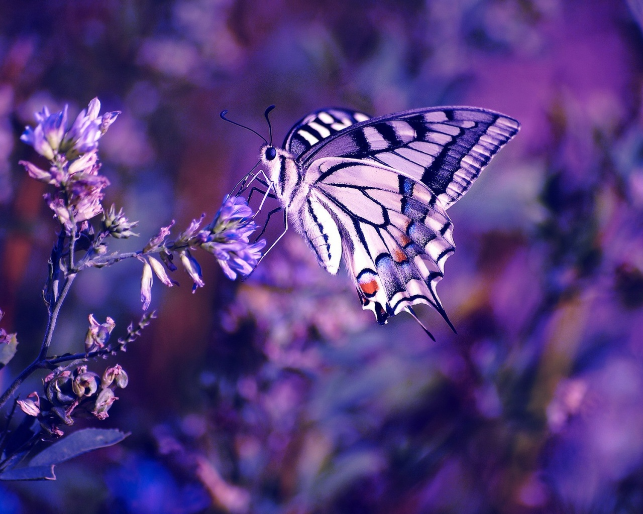Flower Butterfly Purple Background , HD Wallpaper & Backgrounds