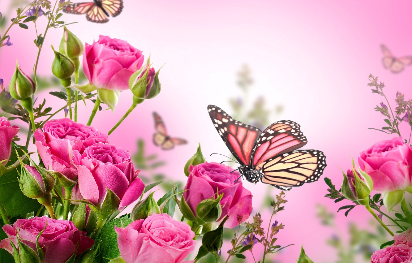 Photo Wallpaper Butterfly, Flowers, Roses, Flowering, - Beautiful Butterfly And Flower , HD Wallpaper & Backgrounds