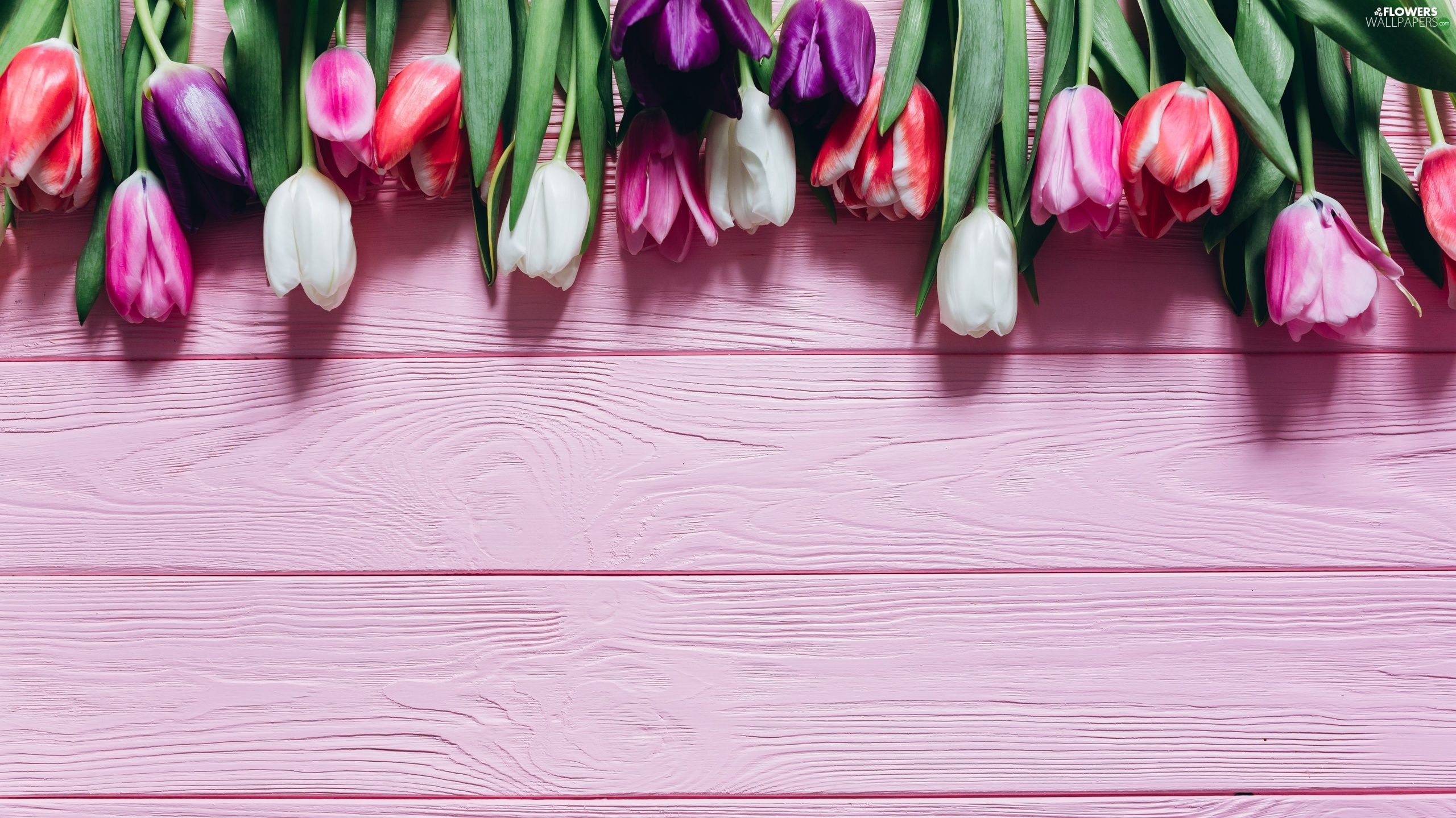 Pink, Boarding, Color, Tulips, Flowers - Kwiaty Tapeta Na Pulpit , HD Wallpaper & Backgrounds