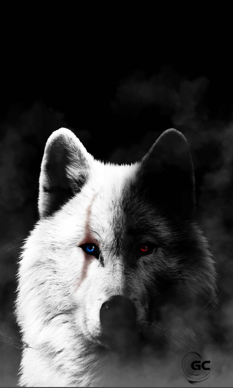 Black And White Wolf Wallpaper By Gregchourmouziadis Black And White Wolf Phone 3166203 Hd Wallpaper Backgrounds Download