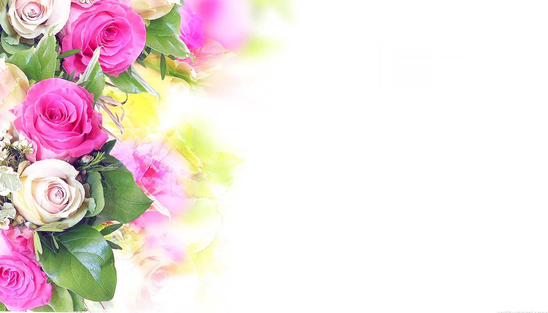 Flower Background Hd Wallpaper - Hd Flower And Background White , HD Wallpaper & Backgrounds