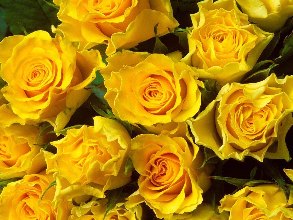 Hd Wallpapers Of Beautiful Flowers , HD Wallpaper & Backgrounds