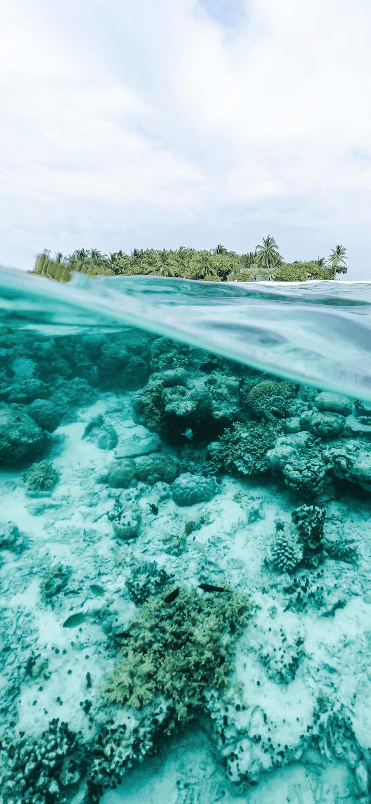 Underwater Ocean Wallpaper Iphone 3171423 Hd Wallpaper Backgrounds Download