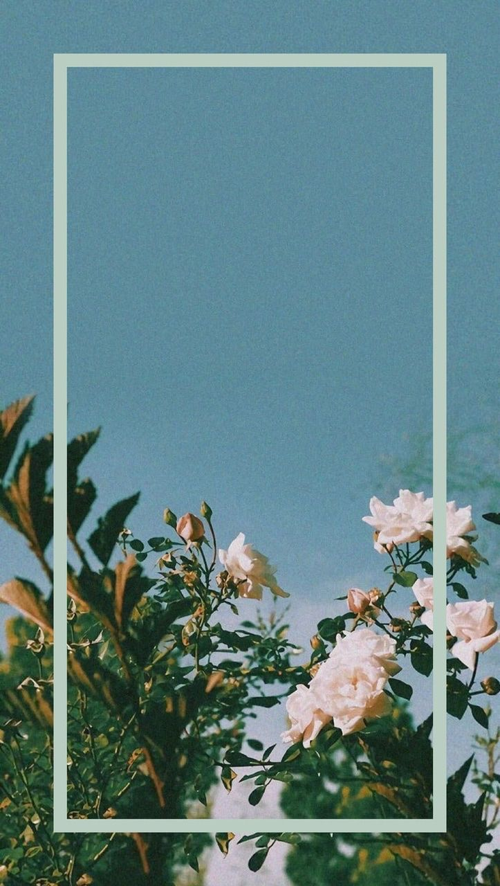 Background Flower Aesthetic , HD Wallpaper & Backgrounds