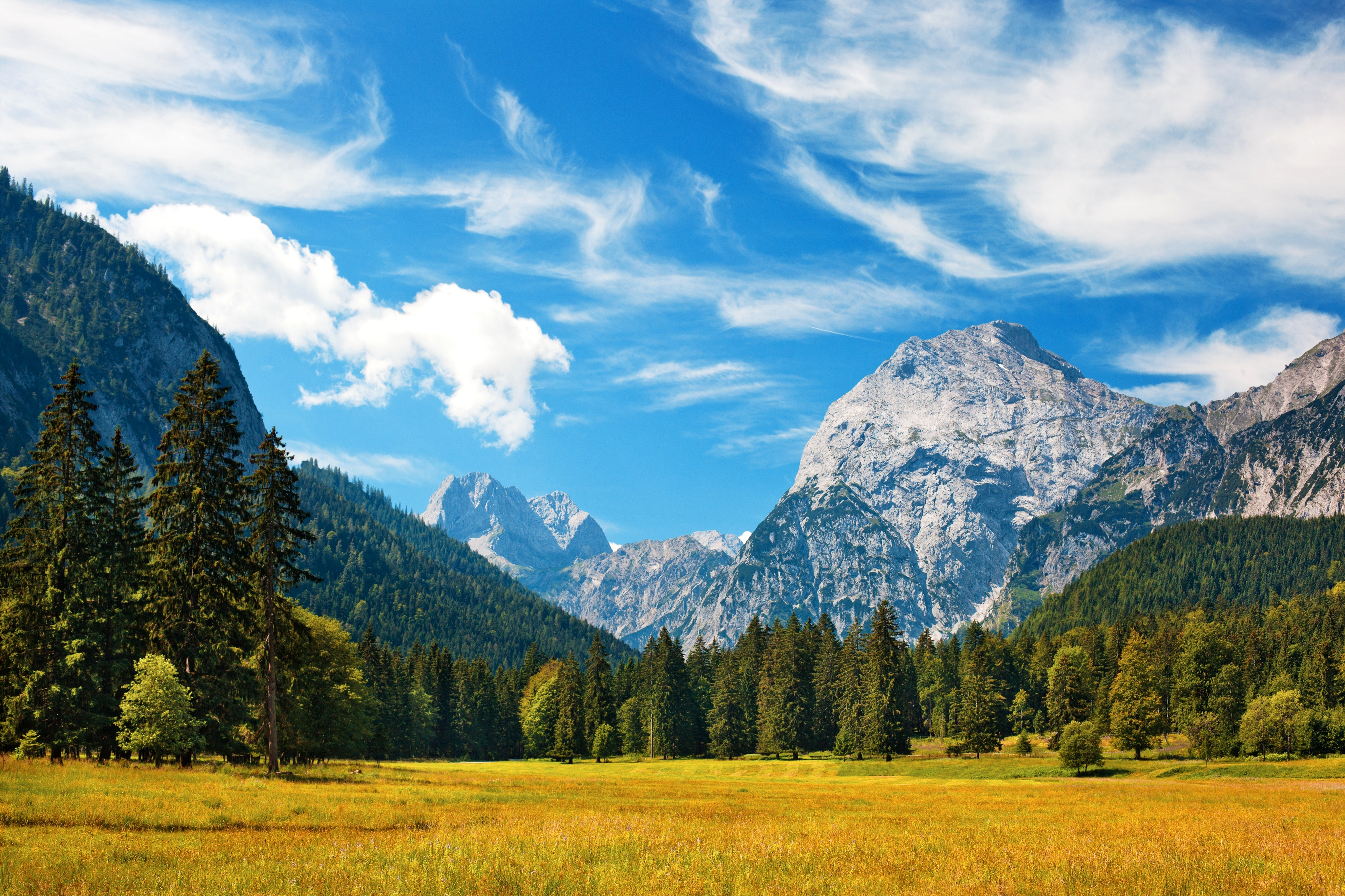 Mountain Forest Background Hd , HD Wallpaper & Backgrounds
